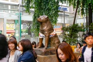 Hachikō-Statue (jap. ハチ公) am Bahnhof Shibuya.