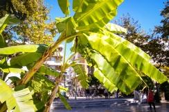 Bananen im Stadtpark.