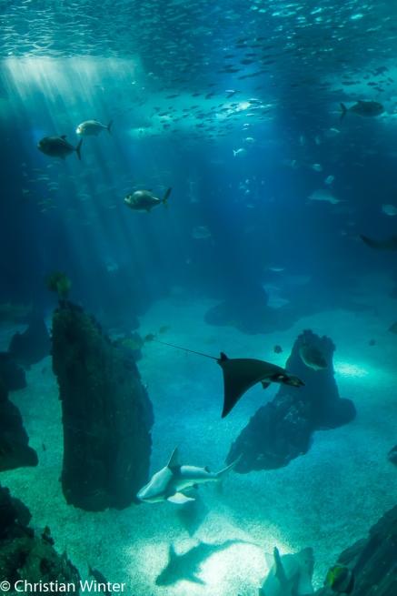 Das Ozeaneum beherbergt neben mehreren Arten von Haien und Rochen auch Thunfische und Sardinen sowie Mondfische.